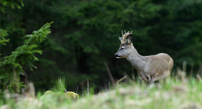 Wildtiere-beobachten
