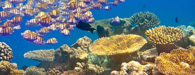 Korallenriff adoptieren