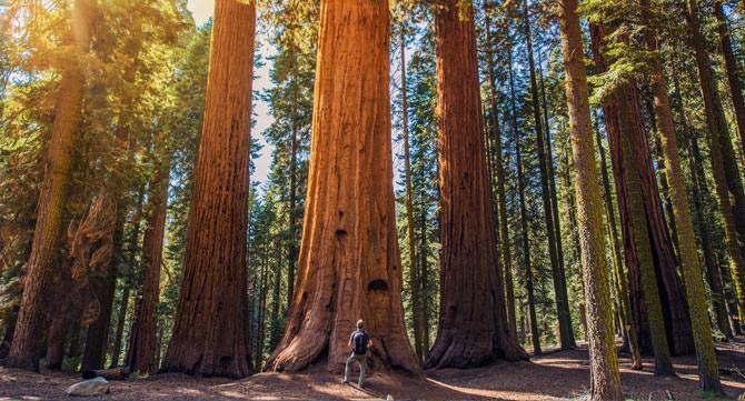 Sequoia National Park Kalifornien
