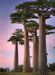 Indischer Ozean Madagaskar