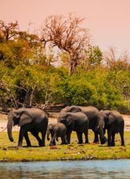 Südafrika Norden Botswana