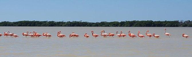 Flamingos im Naturschutzgebiet