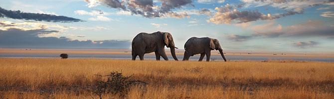 safari_kenia